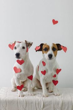 21 Things You Will Only Understand if You Have a Jack Russell | Page 2 of 6 | The Paws