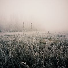 You can't get too much winter in the winter. ~ Robert Frost  #love #winter #snow #fog