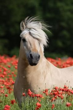 Beautiful Horse in the Wild Flowers