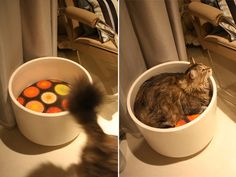 BIG planter + cushion = instant cat bed that contains the hair and looks pretty good too!