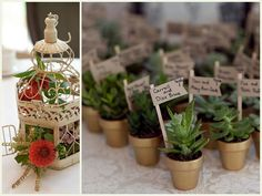 miniature succulents with name signs - Google Search