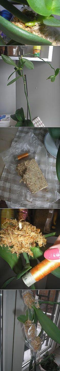Как укоренить ростки орхидеи | САД НА ПОДОКОННИКЕ