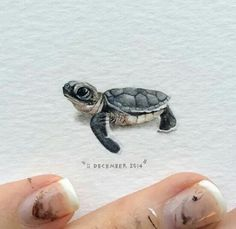 Day 345 : Occasionally you may find a leatherback turtle and perhaps even a green sea turtle hatchling (pictured here) stranded around the Cape Town coast. The Two Oceans Aquarium will be able to rehabilitate these babies. 25 x 27 mm. Mini Paintings, Watercolor Paintings, Miniature Paintings, Painting Art, Watercolour, Animal Drawings, Art Drawings, Drawing Art, Turtle Tattoo Designs