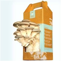 Grow-at-home mushroom kit lets you grow up to 1 1/2 lbs of gourmet, tasty oyster mushrooms per box... harvest your first crop in as little as 10 days!  They make a great holiday gift and can last in the boxes for months before opening.