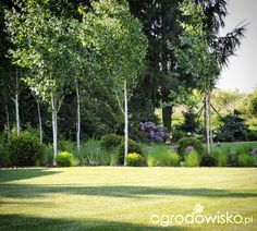 Green Garden, Herb Garden, Landscape Design, Garden Design, Natural Garden, Ornamental Grasses, Water Plants, Small Gardens, Flower Beds