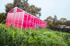 Thanks to a transparent solar panel developed at UC Santa Cruz, greenhouses are enjoying a new moment in the sun.