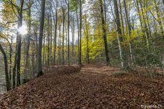 Next stop: Wilderness - Travel Wilderness, Switzerland, Country Roads, Wonderland, Travel, Road Trip Destinations, Beautiful Places, Hiking, Woodland Forest
