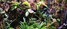 An update on the Paphiopedilum and Phalaenopsis orchids inside my Rainforest Terrarium – Pumpkin Beth - Modern Orchid Terrarium, Terrarium Plants, Miniature Orchids, Bottle Garden, Phalaenopsis Orchid, Planting Flowers, Flowering Plants, Plant Care, Compost