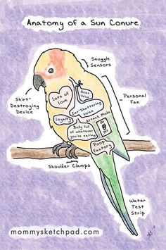 Anatomy of a conure