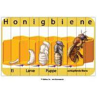 Projekt Bienen Kindergarten Und Kita Ideen Kids Learning