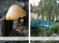 A toadstool and our Monet Bridge at Mirbeau.