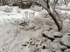 puutarha pukeutui talvipukuun