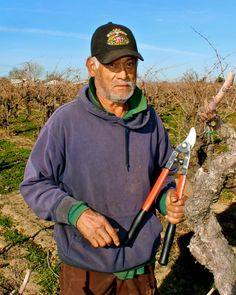 One-man pruning team (Lodi's west-side)