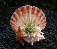 Image result for seashell zen