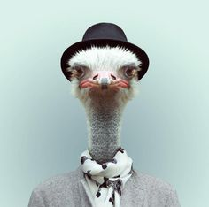Barcelona-based photographer Yago Partal created a hilarious photo series called 'Zoo Portraits