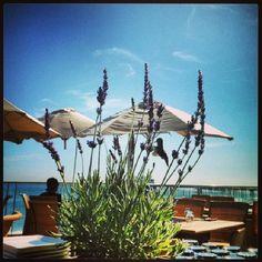 "Hummingbird. #CarbonBeachClub #oceanfront #terrace #hummingbird #Malibulife #Malibu"""