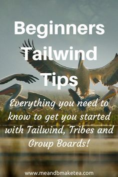 Tailwind is essentially a tool for boosting your Pinterest and Instagram marketing efforts.Using Tailwind, you can schedule content, discover content and analyse efforts. All in one tool. Note, this isn't a sponsored Tailwind post – I just really love thi