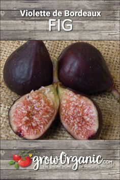 Extra Rare Unique Fig Tree Variety Tiger Panache Fig ~40 Top Quality Seeds