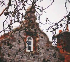 "408 Beğenme, 14 Yorum - Instagram'da Ragini R (@kittehinfurs): ""October mood 🍂"""