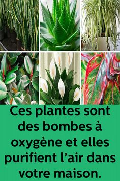 Put at least one of these 6 plants in your home to purify the air and eliminate toxins - New Deko Sites