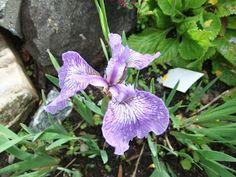 Hage 69 grader N: De gamle staudene fra oldemors hage Planters, Plant, Window Boxes, Pot Holders, Flower Planters, Pots