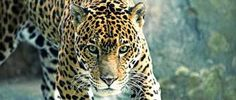 Very good afternoon here Horoscope November 16 to November 22, 2015, with the most beautiful pictures of Belize. A hug, very lucky. Adriana Solomon.