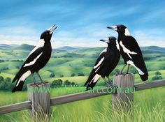 These familiar black and white birds are common in towns and bushland all over Australia. The magpie is well known for it's beautiful morning warbling and its quirky, yet intelligent personality. Black And White Birds, Bird Quilt, Australian Animals, Wildlife Art, Bird Art, Beautiful Birds, Beautiful Images, Pet Birds, Art Pictures