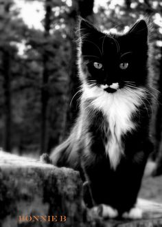 Cat photography kitten black and white