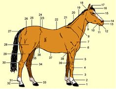 Anita's Paardenwereld - Exterieur