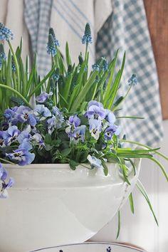 VIBEKE DESIGN: Vårlig og blått !