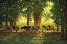 "HEADING HOME by Chris Cummings ~ ""We ran a small dairy and had about forty Holsteins at our farm for ten years. Each cow had a name, and it was always a pleasure watching them head to the barn at milking time.""  Limited edition of 850 signed and numbered prints. Image size, 18"" x 27"".  LOW INVENTORY!"