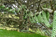 knitwhatyouexpected:    Mia Hamilton's ginormous French knitting wrapped around a tree.