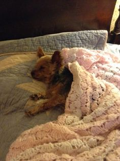 Our sweet DaisyBell not feeling well after a day at the Vets. FYI make sure your Veterinarian is not to rough with your little ones. If you handle your small one at home gently , ask politely that they do the same. Yorkies can be sensitive , this poor baby didn't move all night .