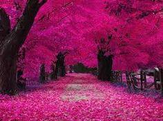 paisajes de color rosa - Buscar con Google