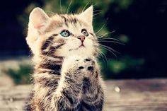 """Résultat de recherche d'images pour """"image chatons"""""""