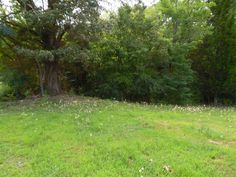 Excellent farm with 1135' +/- of Tennessee River footage. Property features 120+/- acres row crop, balance in hardwood timber. Blacktop road frontage. Great building sites, lots of recreational possibilities with great hunting! Rare opportunity to own this type of property in Savannah TN