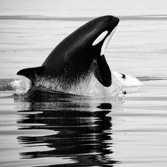 photography by Christopher via Aquaviews online scuba magazine