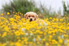 wildflowers and puppies...two of my favorite things :)    Seth Casteel, Little Friends Photo