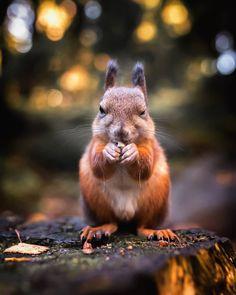 Wildlife Finland: Cute Animal Portraits by Ossi Saarinen