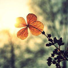 flower in setting sun