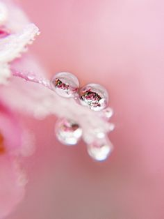Raindrops on a cherry blossom - photo by tanakawho, via Flickr. (Thanks @Janet Hughes for pinning photo that led me to this link!)