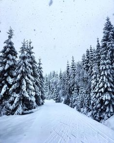 Winter Love, Winter Snow, Winter Christmas, Natural Christmas, Simple Christmas, Christmas Tree, Winter Photography, Nature Photography, Ski Season
