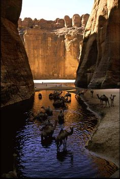 Le Plateau de l'Ennedi et la guelta d'Archei (Massifs dans le Sahara, au nord-est du Tchad)
