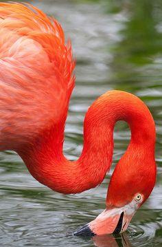 Flamingo at Paradise Park.