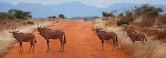 Kenia Reise im Ferienhaus Kenia - Individuelle Jeep Safaris in Kenia