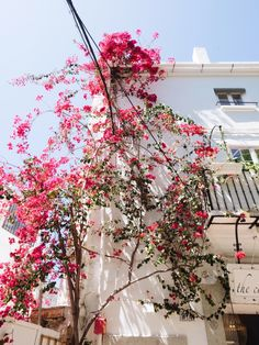 beautiful bougainvilleas everywhere in marbella   see our guide to the costa del sol on coco kelley