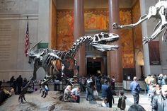 Απολιθώματα δείχνουν ότι κάποιοι δεινόσαυροι, συμπεριλαμβανομένων Allosaurus, ήταν κούφια κόκαλα.  © AMNH / C.  Chesek