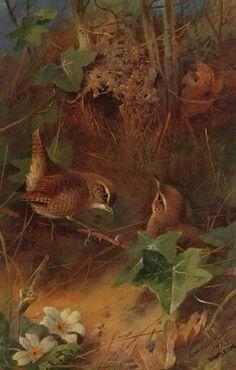 thorburn archibald - Recherche Google