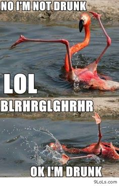 funny memes, funny messages, funny images, funny people, funny ...