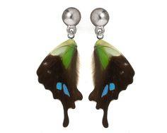 "Resin Coated Real Butterfly Wings Earrings ""Graphium weiskei"" Free Shipping Worldwide Real Butterfly Earrings. $35.00, via Etsy."